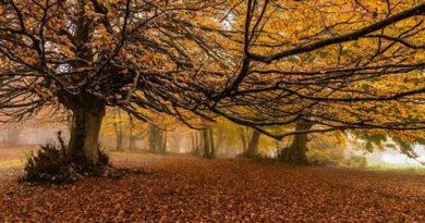 Passeggiata d'autunno – Altopiano di Canfaito e visita al Borgo di Elcito